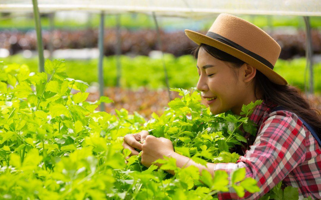 Agronegócio nas Vendas Online: Números Promissores e Oportunidades em Alta
